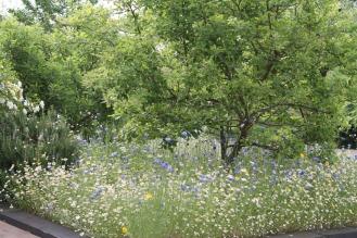 WildFlowersAppleTrees